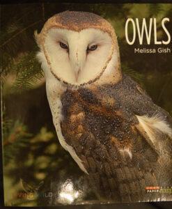 owls-12-99